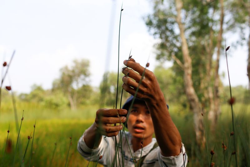 Tran Minh Tien, owner of 3T shop, collects grass to make straws at a field in Long An province. Photo: Reuters