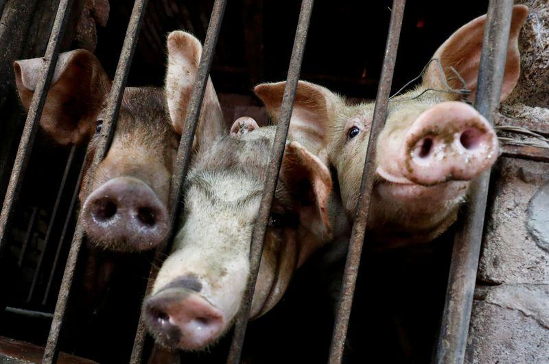 Vietnam's pork imports more than double amid swine fever outbreak