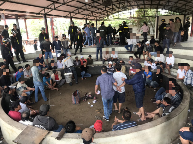 Police arrest 13 in cockfight gambling ring in south-central Vietnam