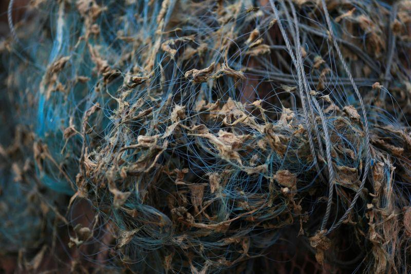 Algae are seen in a fishing net near Mekong river bank outside Nong Khai, Thailand January 10, 2020. Photo: Reuters