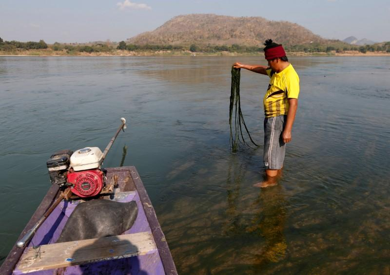 A fisherman shows the algae growing in Mekong river outside Loei, Thailand January 10, 2020. Photo: Reuters