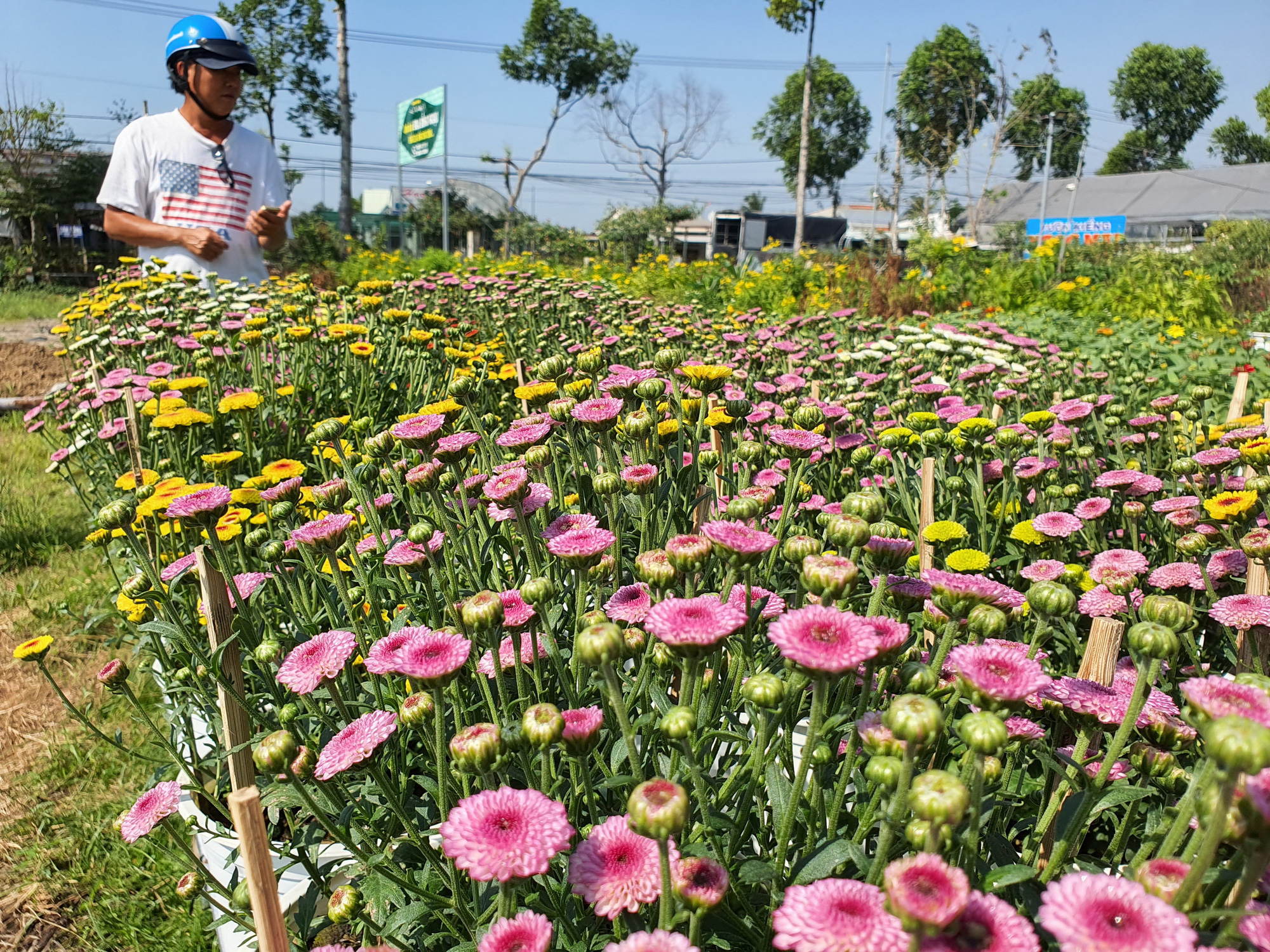 Various flower species are planted at Sa Dec Flower Village. Photo: Chi Quoc / Tuoi Tre