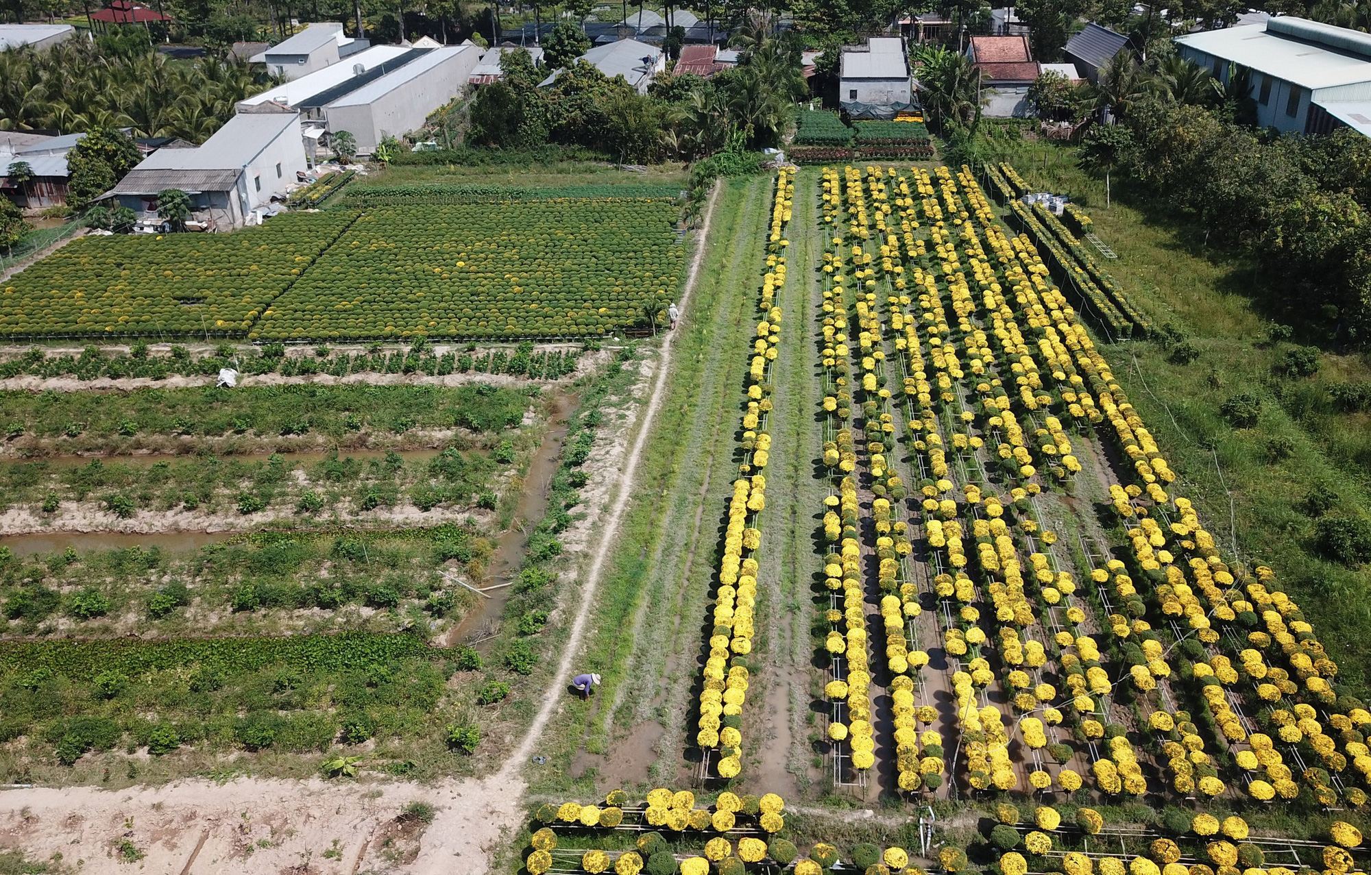 A bird eye view of Sa Dec Flower Village. Photo: Chi Quoc / Tuoi Tre