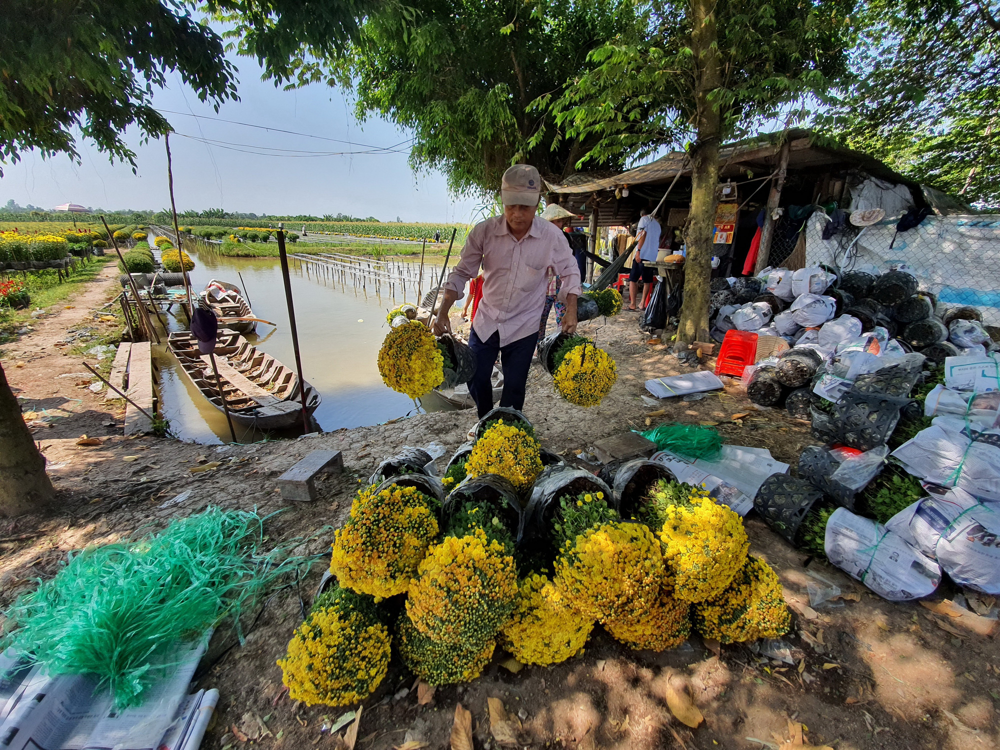 Pots of flowers are ready to be shipped to buyers. Photo: Chi Quoc / Tuoi Tre
