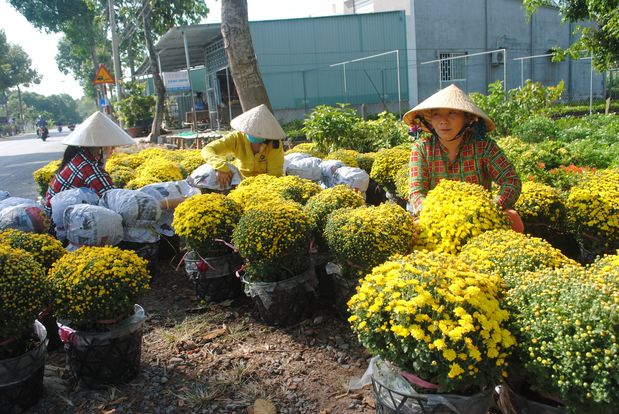 Flowers are carefully prepared prior to delivery. Photo: Chi Quoc / Tuoi Tre