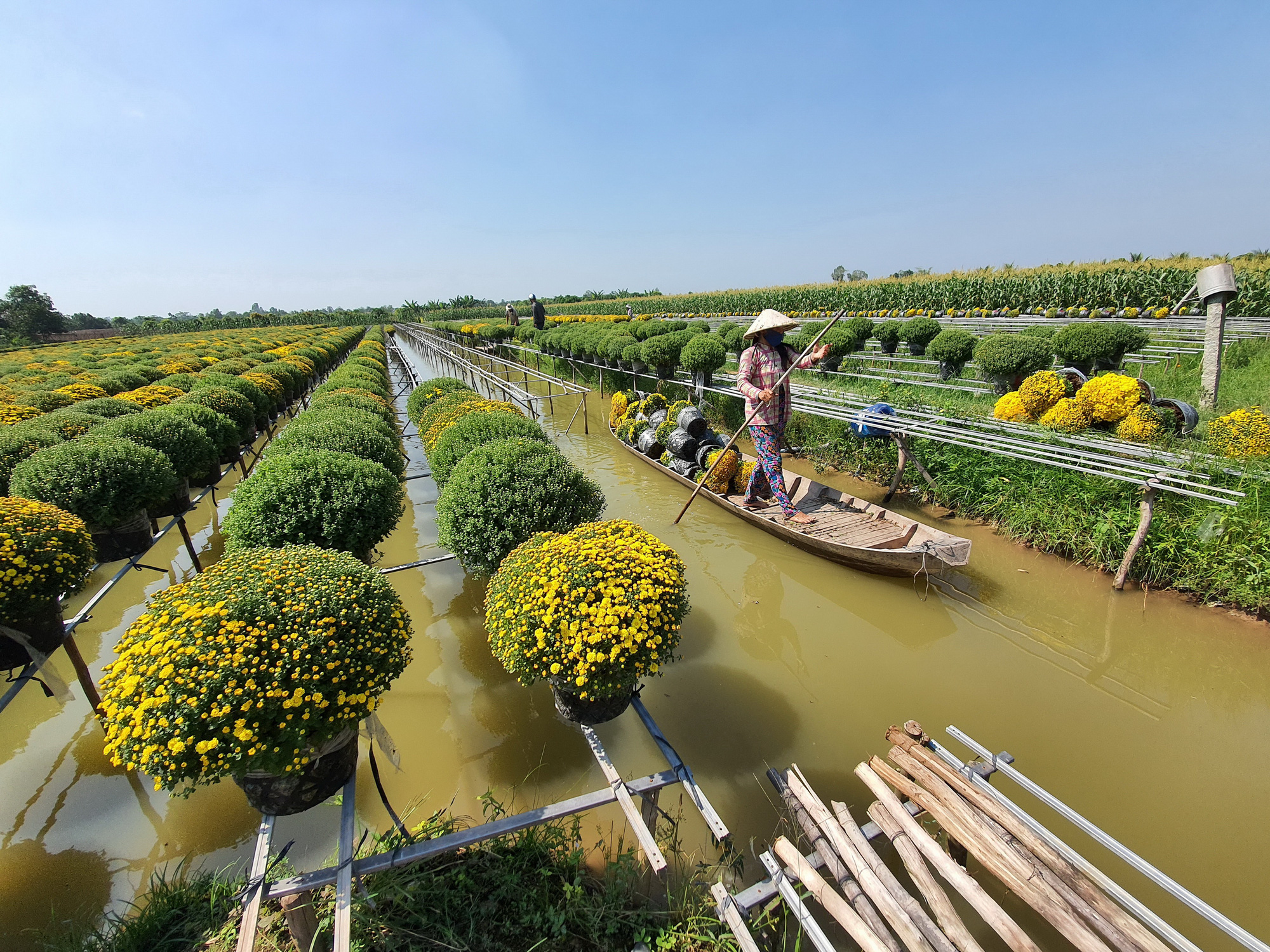Flowers are transported on a raft at Sa Dec Flower Village. Photo: Chi Quoc / Tuoi Tre