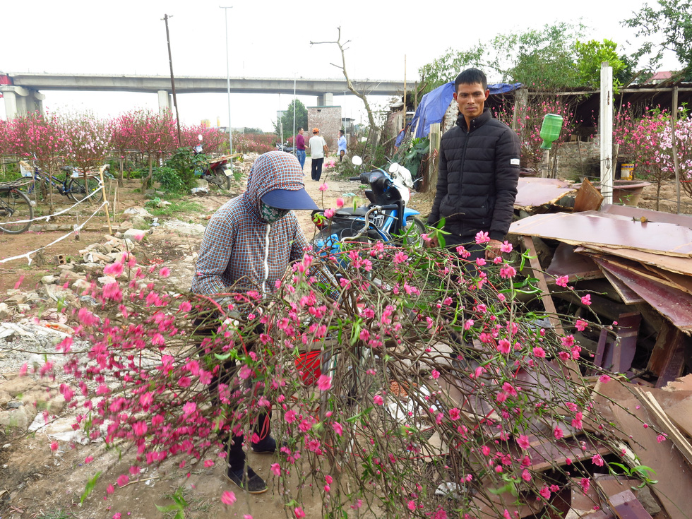 Growers sell off early-blooming peach blossoms in Nhat Tan Ward, Tay Ho District, Hanoi on January 16, 2020. Photo: Q.TH. / Tuoi Tre