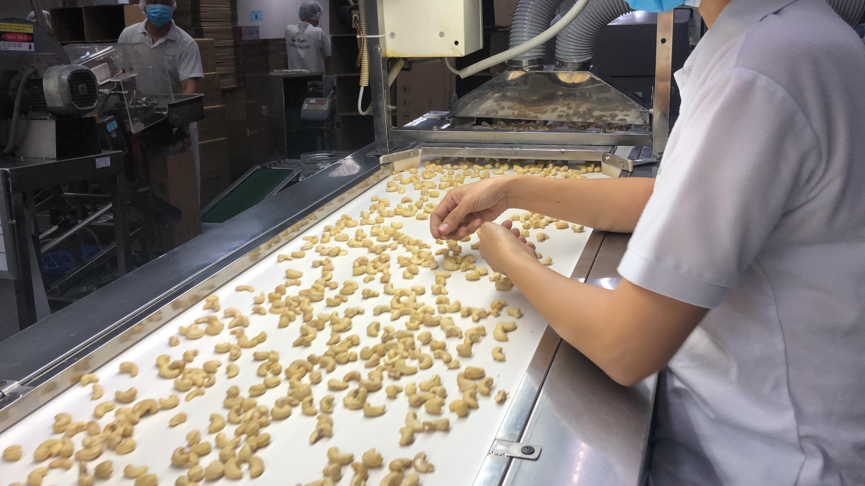 A female staff member sorts out the lower quality cashews from the carousel at Olam's cashew factory in Dong Nai province - Photo: Hong Van