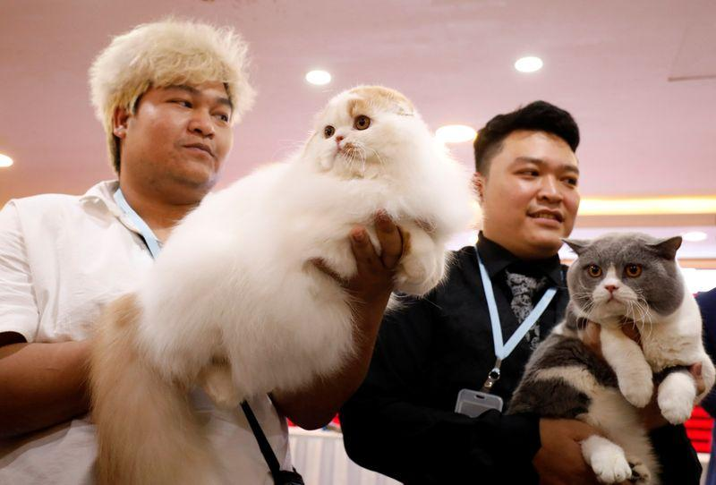 Fancy felines hit Hanoi for first ever cat show