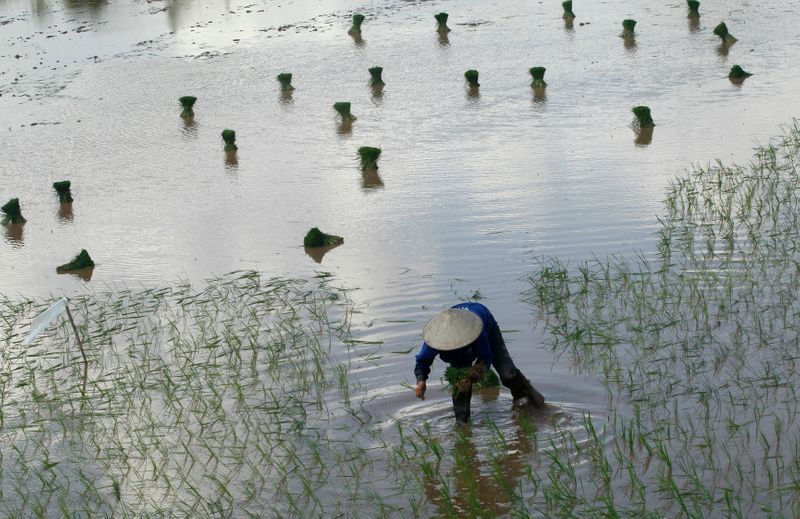 Vietnam rice exports seen up 6% this year to 6.75 million metric tons: food association