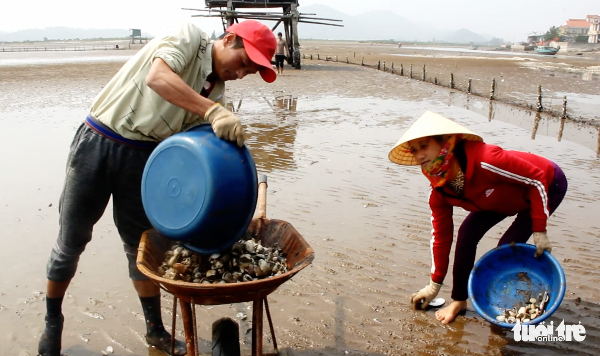 Farmers collect dead clams in Nghe An Province, Vietnam. Photo: Doan Hoa / Tuoi Tre