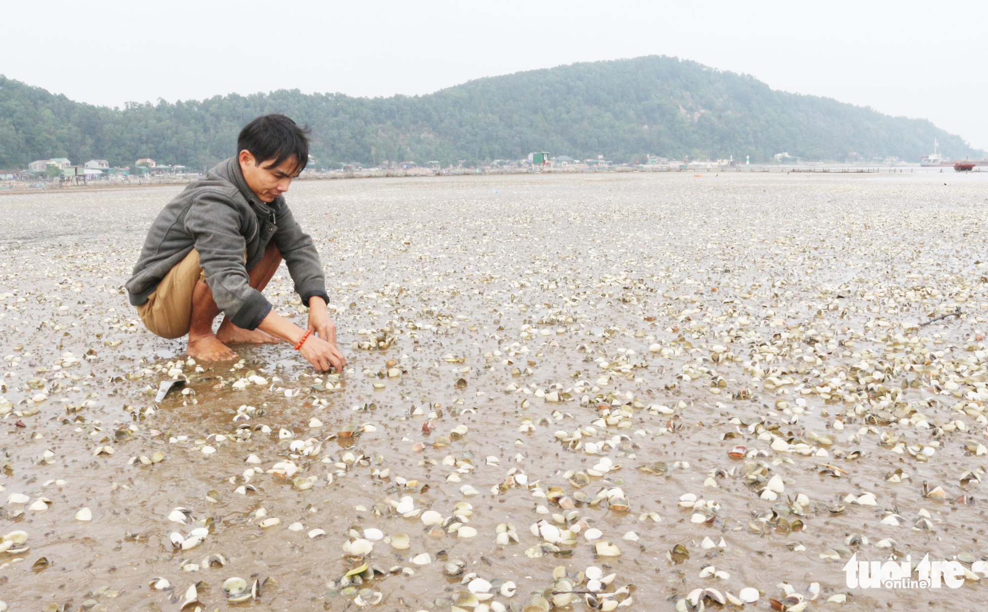 A man is hired to collect dead clams at a farm in Nghe An Province, Vietnam. Photo: Doan Hoa / Tuoi Tre