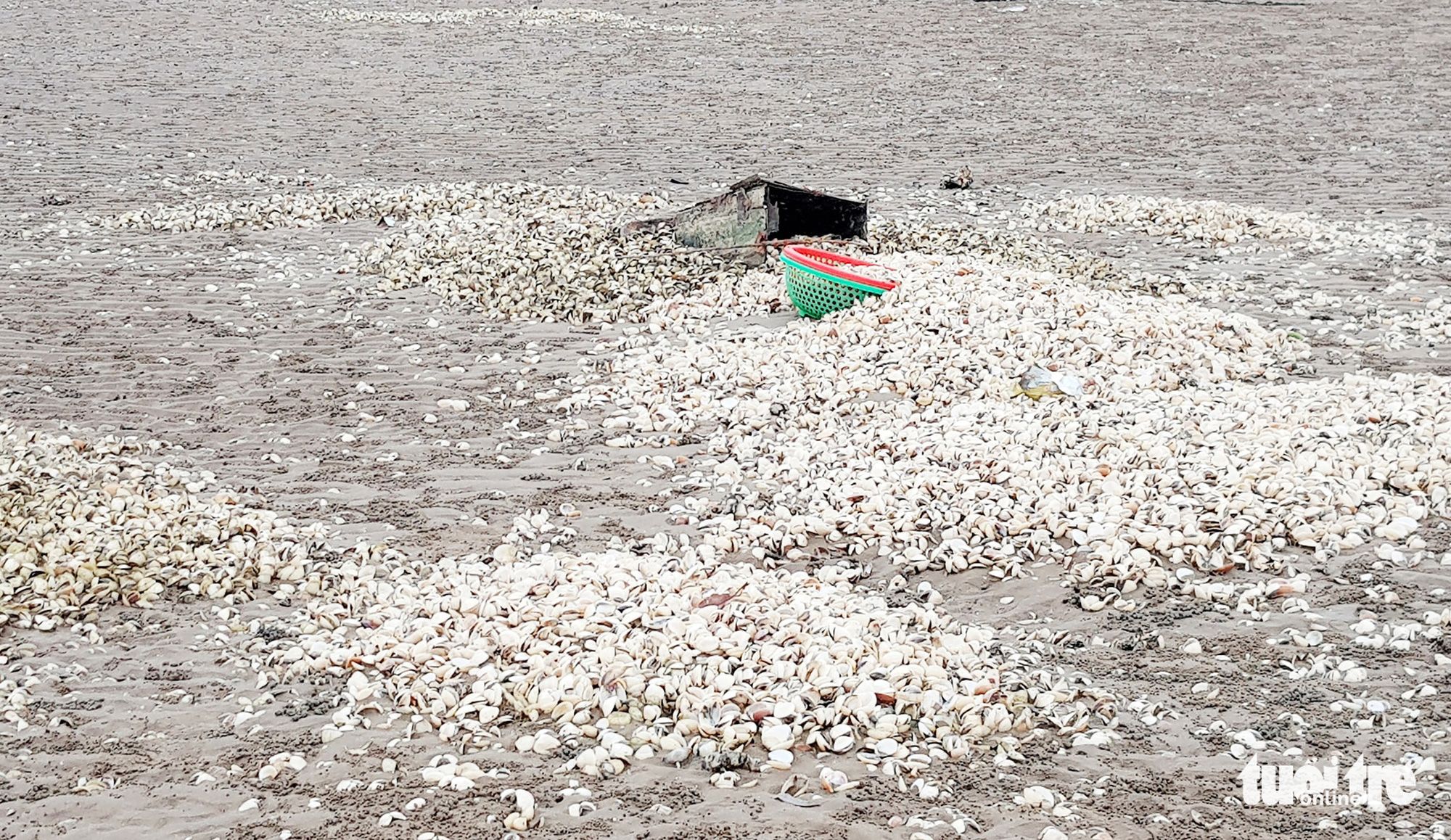 Dead clams pile up in Nghe An Province, Vietnam. Photo: Doan Hoa / Tuoi Tre