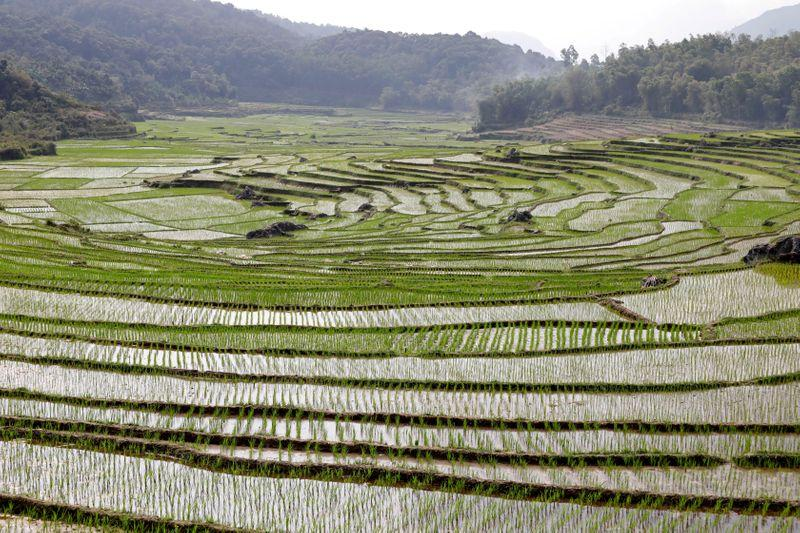 Vietnam's ban on rice exports still in force, govt may set limit: traders