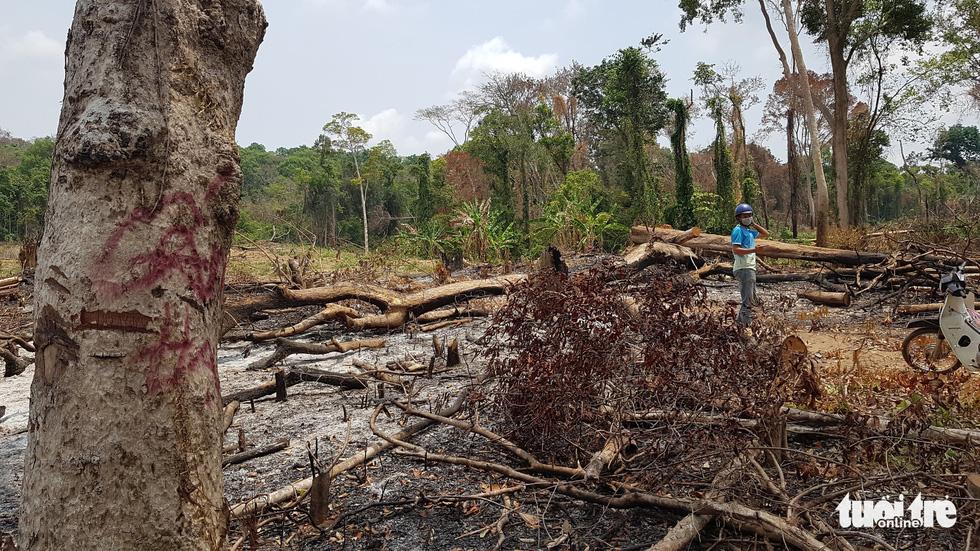 Illegal logging rampantin Vietnam's Central Highlands