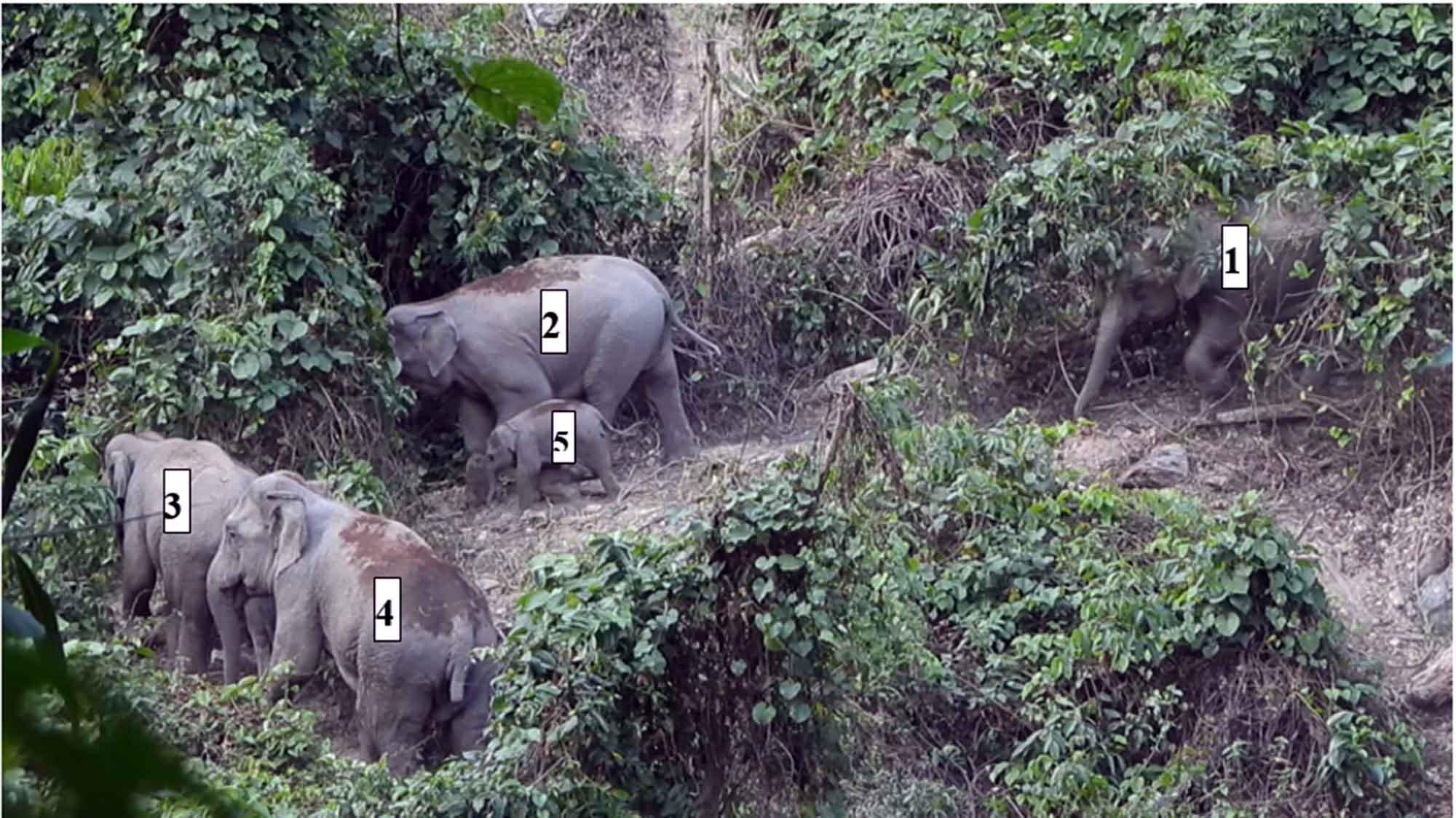 Wild elephants thrive in central Vietnam's sanctuary