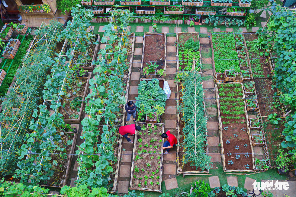 A top-down view of a vegetable garden in Binh Chanh District, Ho Chi Minh City, Vietnam, May 16, 2020. Photo: Ngoc Phuong / Tuoi Tre