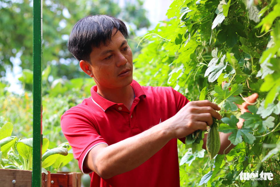Nguyen Ba Trinh takes care of the plants in his vegetable garden in Binh Chanh District, Ho Chi Minh City, Vietnam, May 16, 2020. Photo: Ngoc Phuong / Tuoi Tre