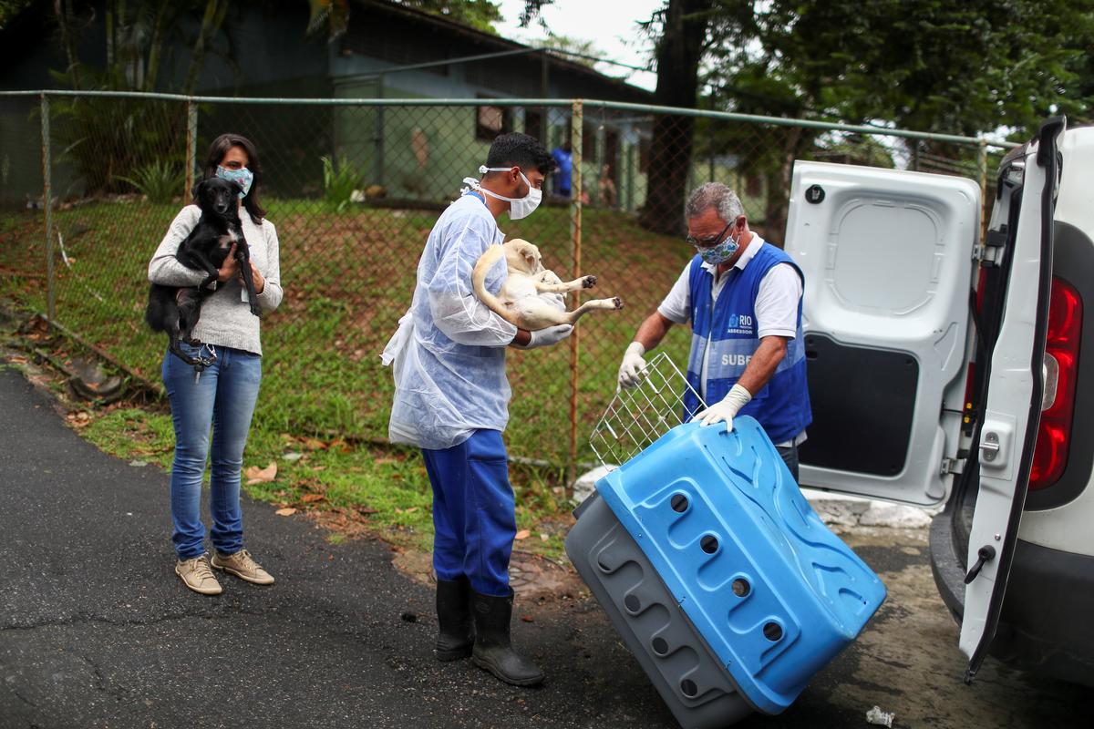 Workers carry Sansa (L) and Dorothy to a car, at a shelter managed by the Rio de Janeiro City Hall, that launched a pet delivery campaign to find homes for abandoned animals, during the coronavirus disease (COVID-19) outbreak, in Rio de Janeiro, Brazil May 15, 2020. Photo: Reuters