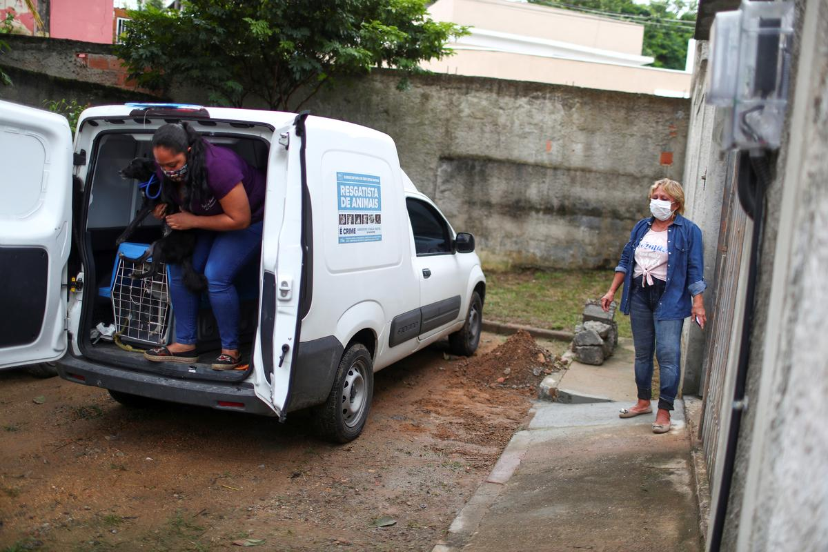 Maria de Fatima Cordeiro Marques, who recovered from the coronavirus disease, waits for her adopted dog Sansa at the entrance of her home, as a part of a pet delivery campaign to find homes for abandoned animals managed by Rio de Janeiro City Hall during the coronavirus disease (COVID-19) outbreak, in Rio de Janeiro, Brazil May 15, 2020. Photo: Reuters
