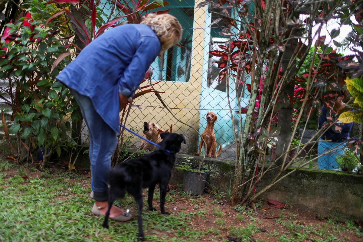Maria de Fatima Cordeiro Marques, who recovered from the coronavirus disease, shows her adopted dog Sansa to her neighbor's dogs after arriving home, as a part of a pet delivery campaign to find homes for abandoned animals managed by Rio de Janeiro City Hall during the coronavirus disease (COVID-19) outbreak, in Rio de Janeiro, Brazil May 15, 2020. Photo: Reuters