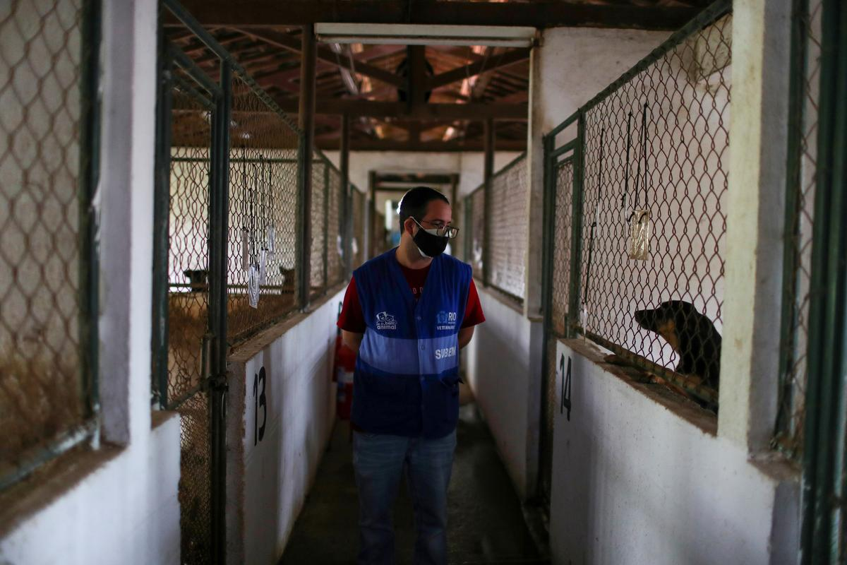 A worker walks next to dogs at a shelter managed by the Rio de Janeiro City Hall that launched a pet delivery campaign to find homes for abandoned animals, during the coronavirus disease (COVID-19) outbreak, in Rio de Janeiro, Brazil May 15, 2020. Photo: Reuters