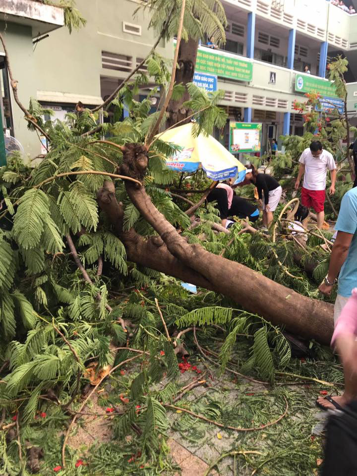 One student killed, 12 injured by falling tree in schoolyard in Ho Chi Minh City