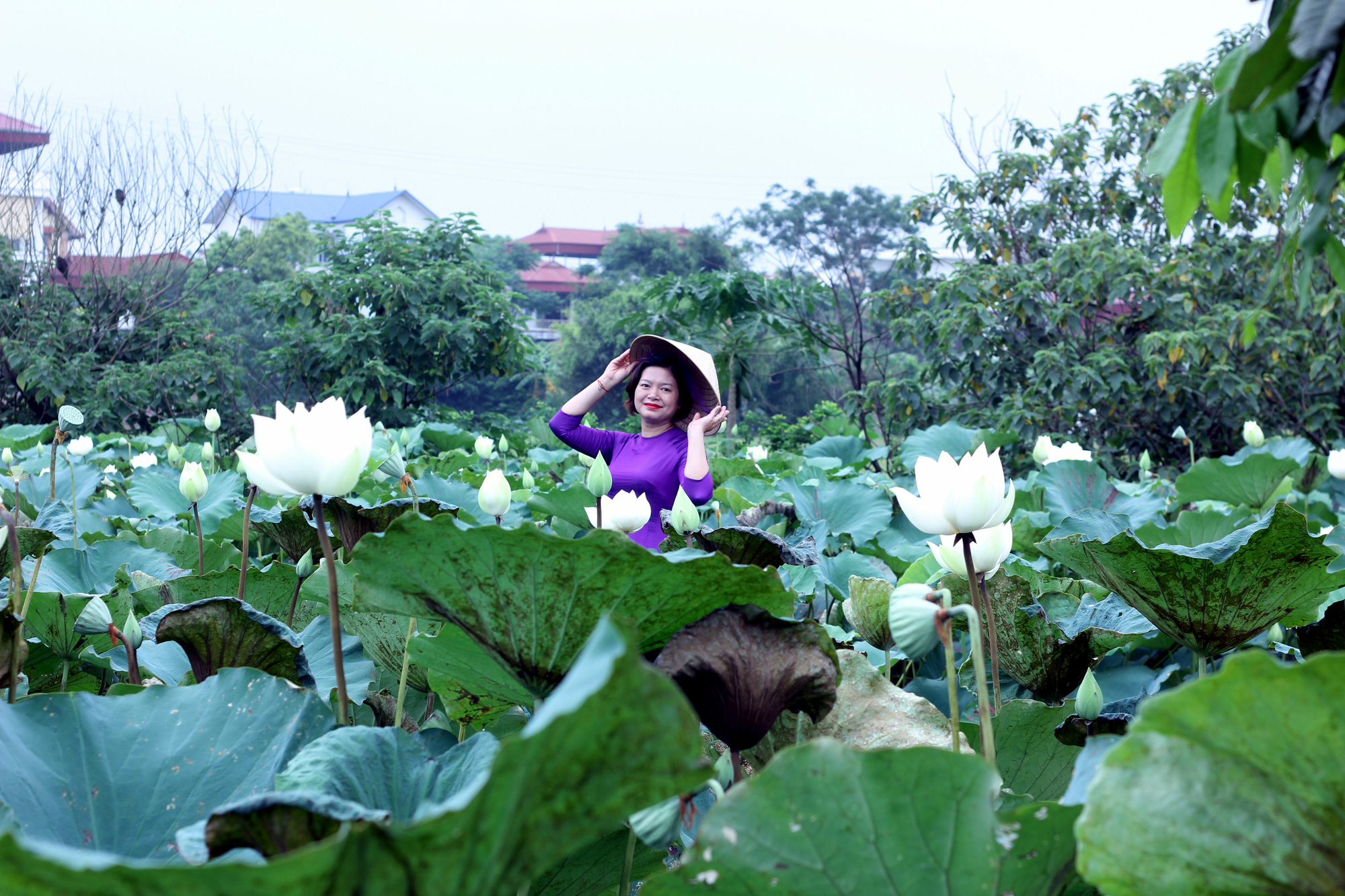 Check out this white lotus pond on the outskirts of Hanoi