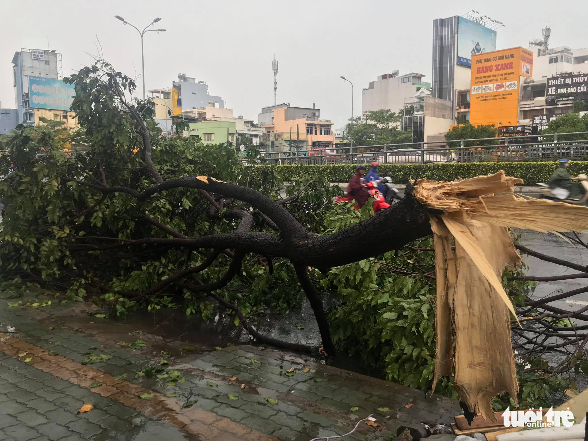 Downpour floods streets, uproots trees in Ho Chi Minh City