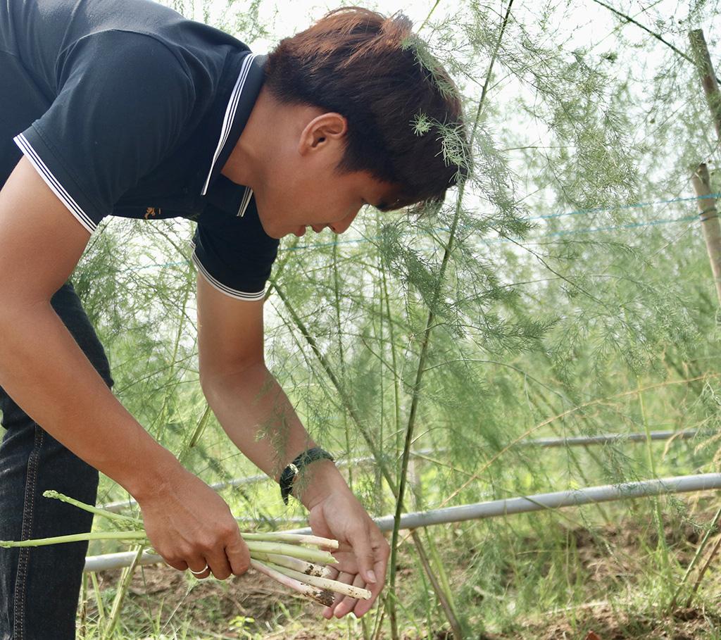 Vietnamese asparagus plantation owner aspires to revitalize hometown