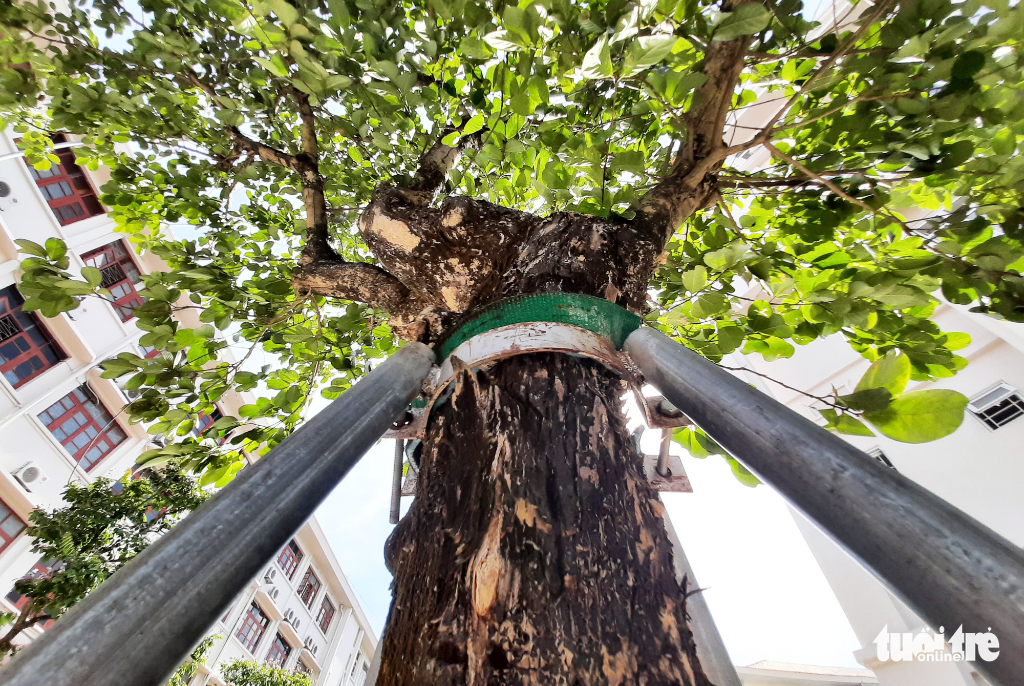 Vietnam schools give green trees 'armor' for safety in rainy season