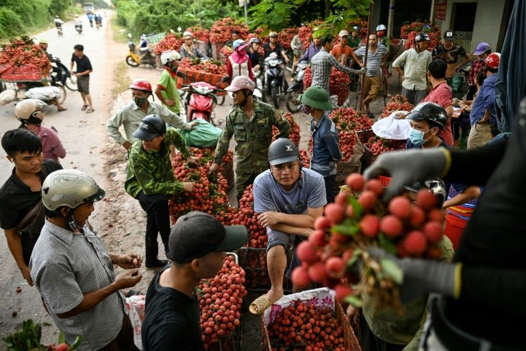Vietnam's lychee crop not bearing fruit as prices slump