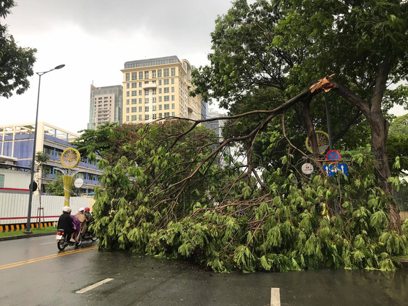 A tree branch broken in a rain blocks a section of Le Duan Street in District 1, Ho Chi Minh City, Vietnam, June 13, 2020. Photo: Quang Dinh / Tuoi Tre