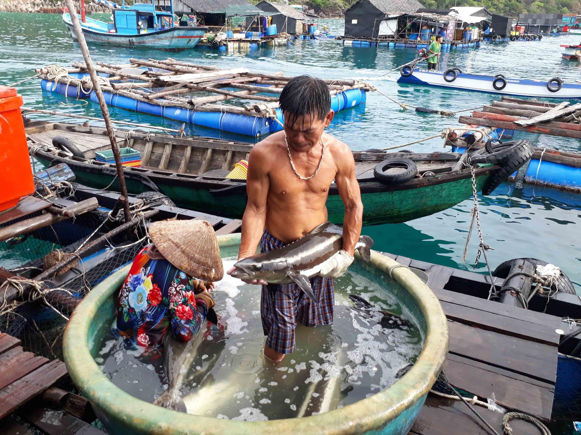 The hidden paradise of Vietnam's Mekong Delta