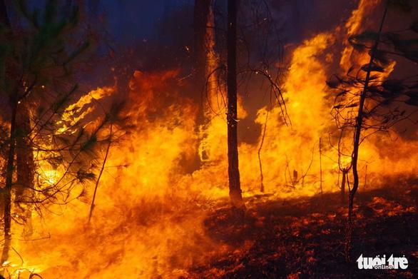 Conflagration destroys over 50ha of forest in Vietnam