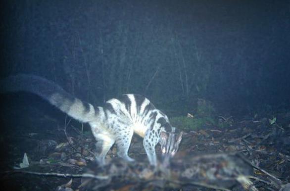 Endangered animals found in Vietnam's Central Highlands national park