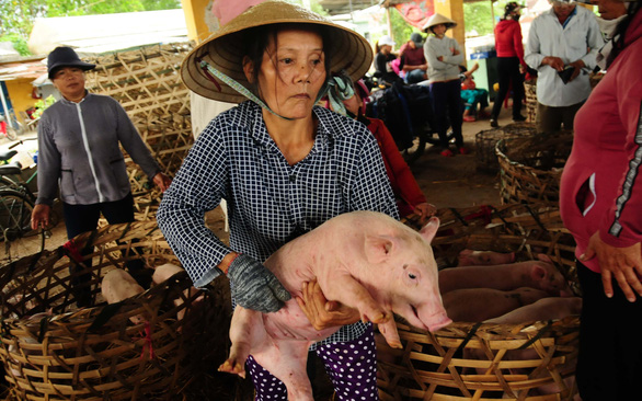 Eking out a living as pig porters in Vietnam