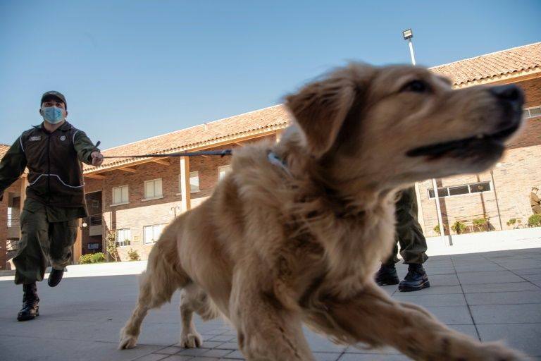 Chilean police train dogs to sniff out COVID-19