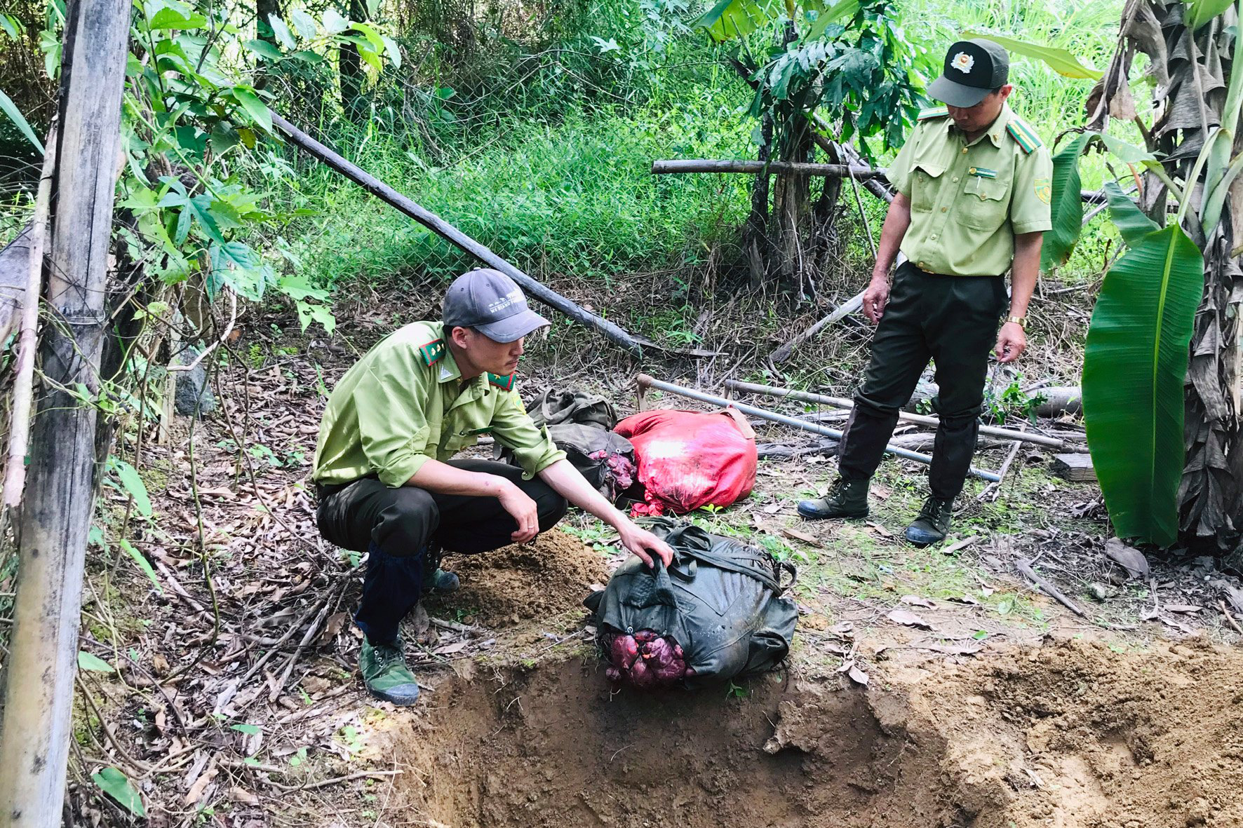 Authorities search for four suspected of slaughtering 200kg gaur in Vietnam national park