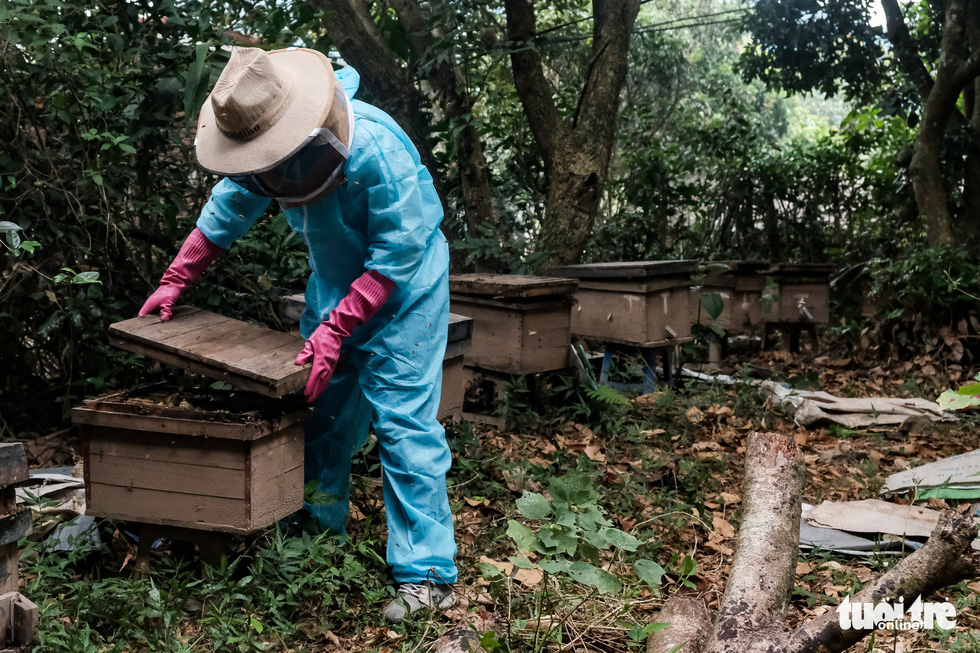After honey is collected, empty trays are put back into beehive boxes. The job ends when the swarms settle back into their hives. Photo: Mai Thuong / Tuoi Tre