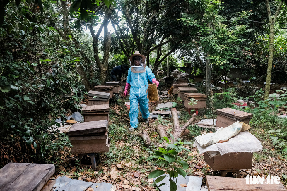 Vu Van Thai's farm, snuggled in Ha Dong District, Hanoi, Vietnam, home to more than 100 boxes of beehives, needs five to seven people to collect honey during harvest time. Photo: Mai Thuong / Tuoi Tre