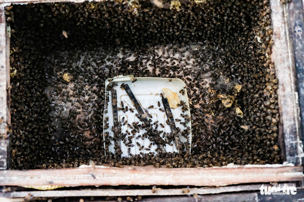 Bee swarms are thrown into 'panic' as the trays containing their hard-earned fruits are removed from the boxes. Photo: Mai Thuong / Tuoi Tre