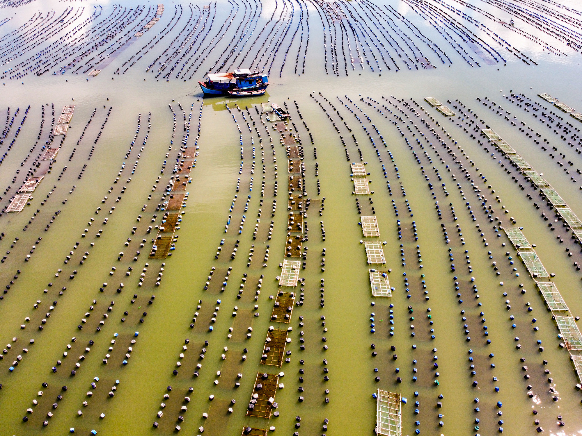 Oyster farming rafts in Can Gio District, Ho Chi Minh City are seen in a photo by Bui Van Nghiep, which won second prize at a local photo contest.