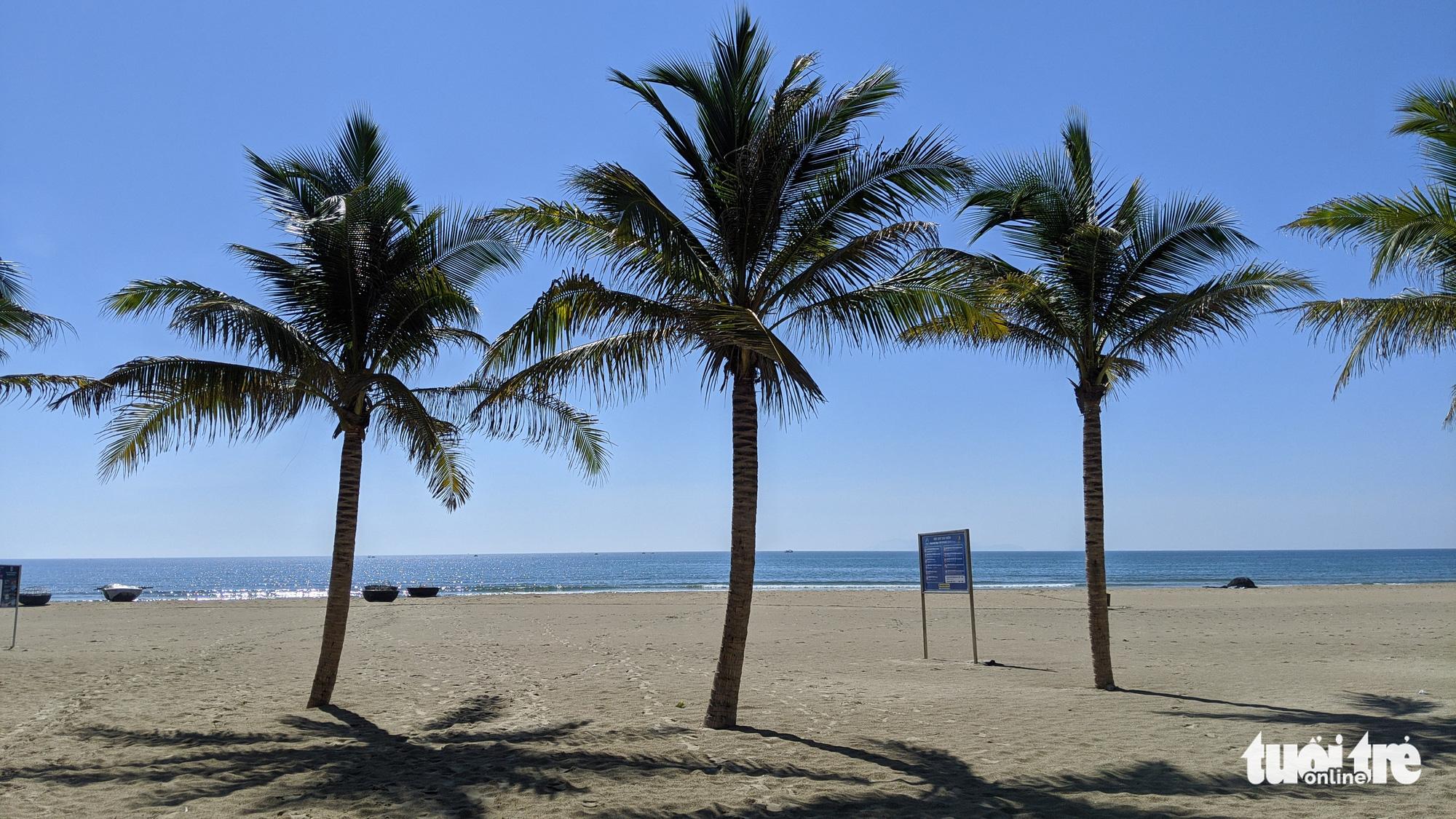 Three coconut trees stand on an empty beach in Da Nang City, Vietnam, July 29, 2020. Photo: Tan Luc / Tuoi Tre