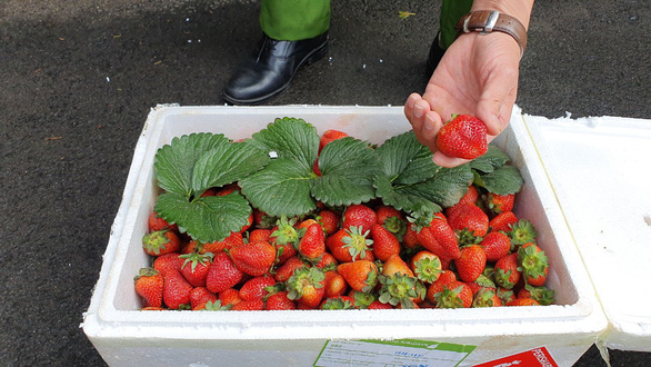 Chinese strawberries found with excessive pesticide residues in Vietnam's Central Highlands