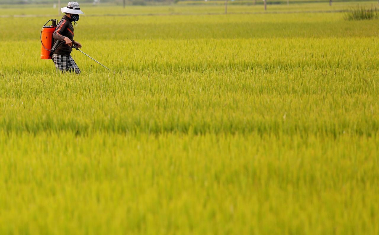 Asia Rice-Virus slows Indian exports; heavy flooding hits Bangladesh