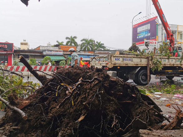 A tree is uprooted due to tornadoes in Can Tho City, Vietnam, August 2020. Photo: T. Luy / Tuoi Tre