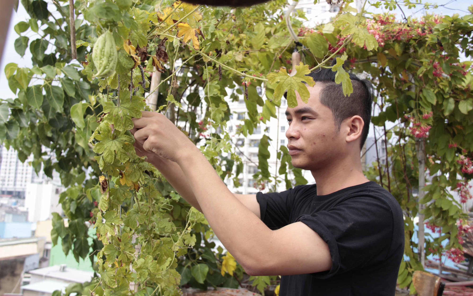 Saigonese sowing seeds of sustainable agriculture in concrete jungle