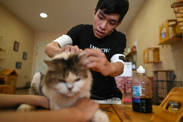 Cafe owner Nguyen Thanh Binh tends to a rescued cat in Hanoi, Vietnam. Photo: AFP
