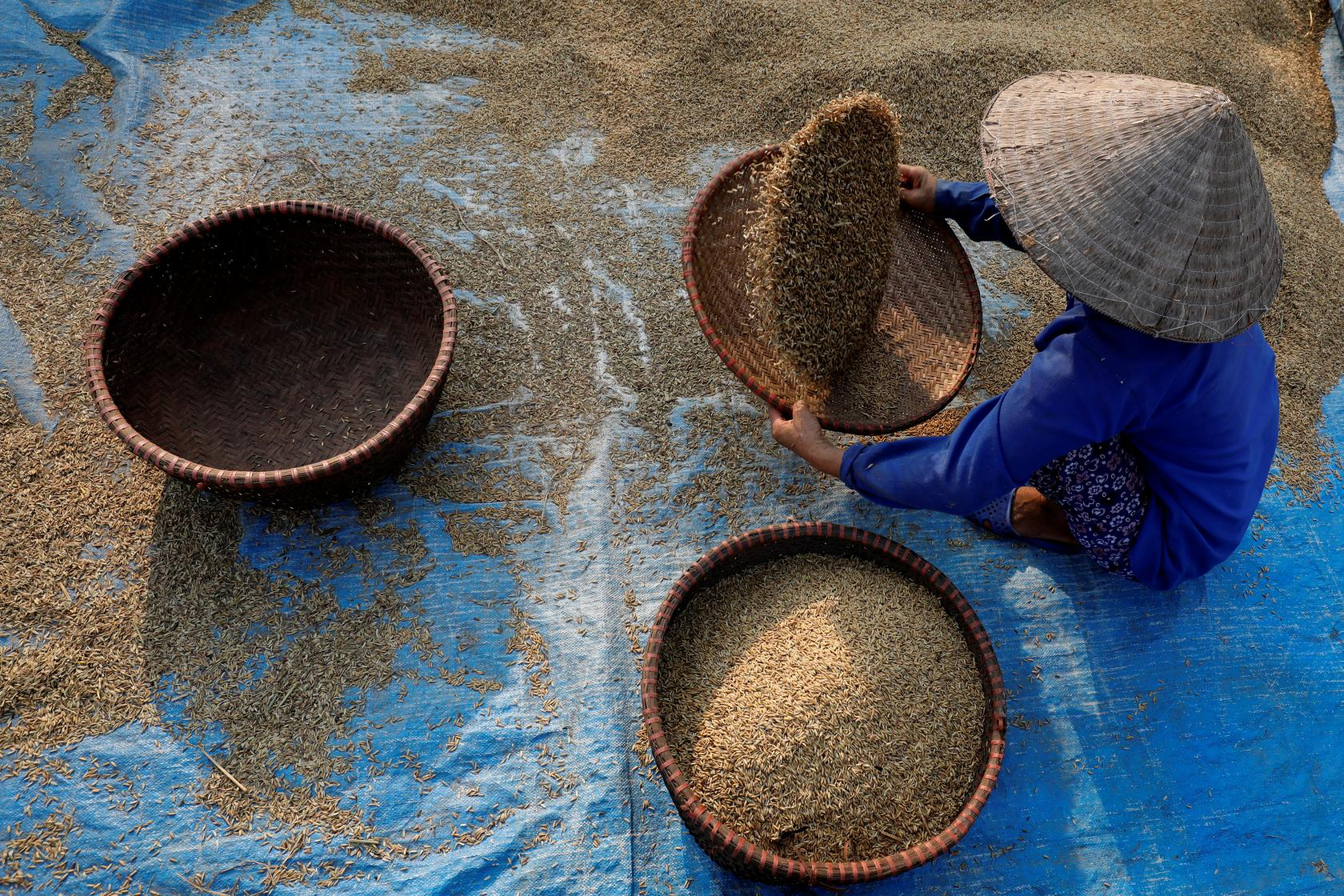 Asia Rice-Supply squeeze lifts Vietnam rates to more than 8-year high